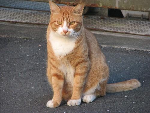 東久留米の猫
